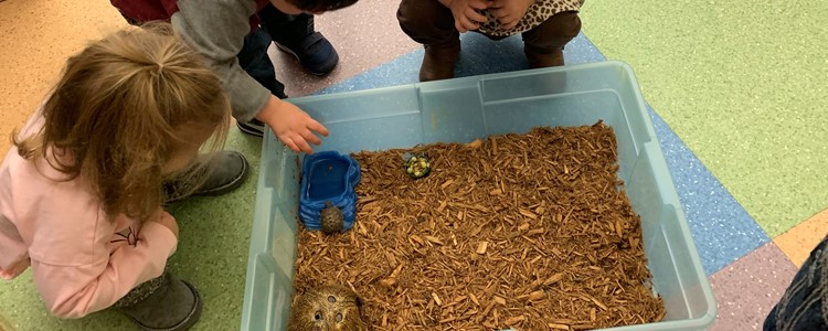 KinderCollege students watching the class turtle, Franklin.